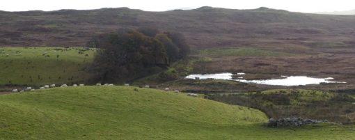 payage écossais avec moutons