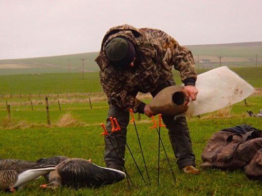 chasse à l'oie