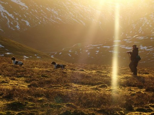 Chasseur voyageant avec chiens en écosse