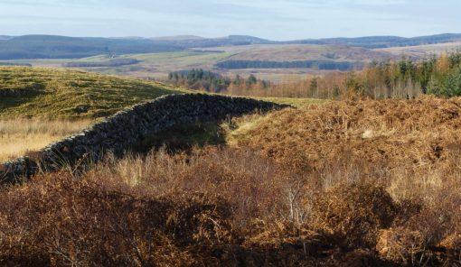 Paysage de chasse en Écosse