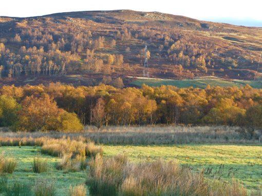 paysage de chasse écossais