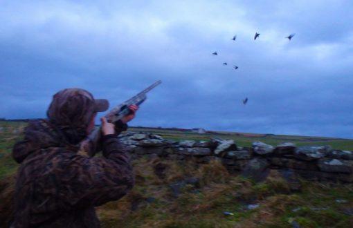 chasse à l'oie et au canard en Écosse