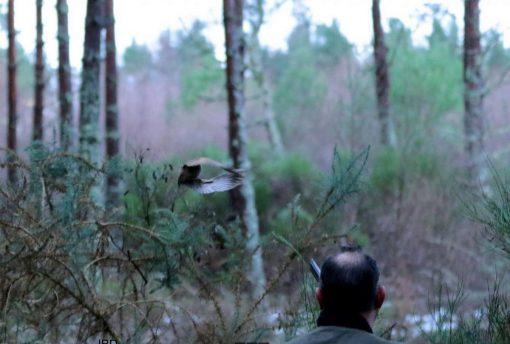 chasseur en ecosse